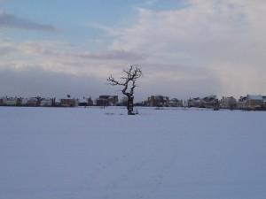 My Busking Tree 2