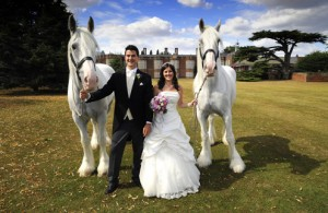 Carriage Horses - Ronnie, Reggie & Us